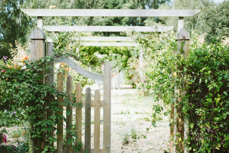 Ivy on Garden Gate