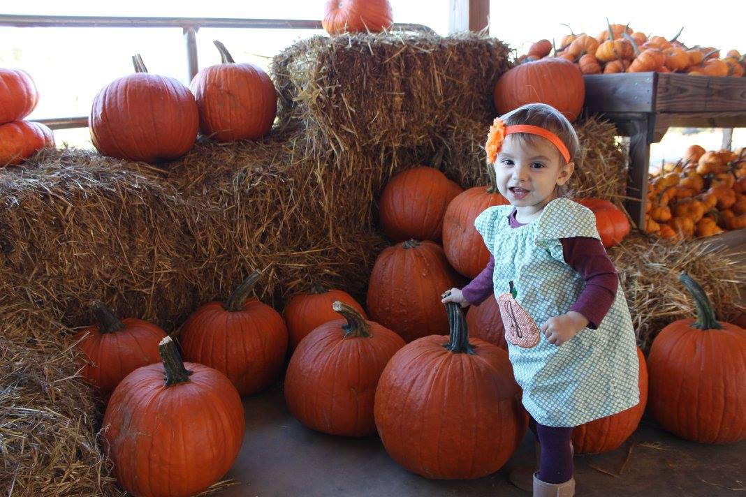 Little girl pumpkin picking in the south