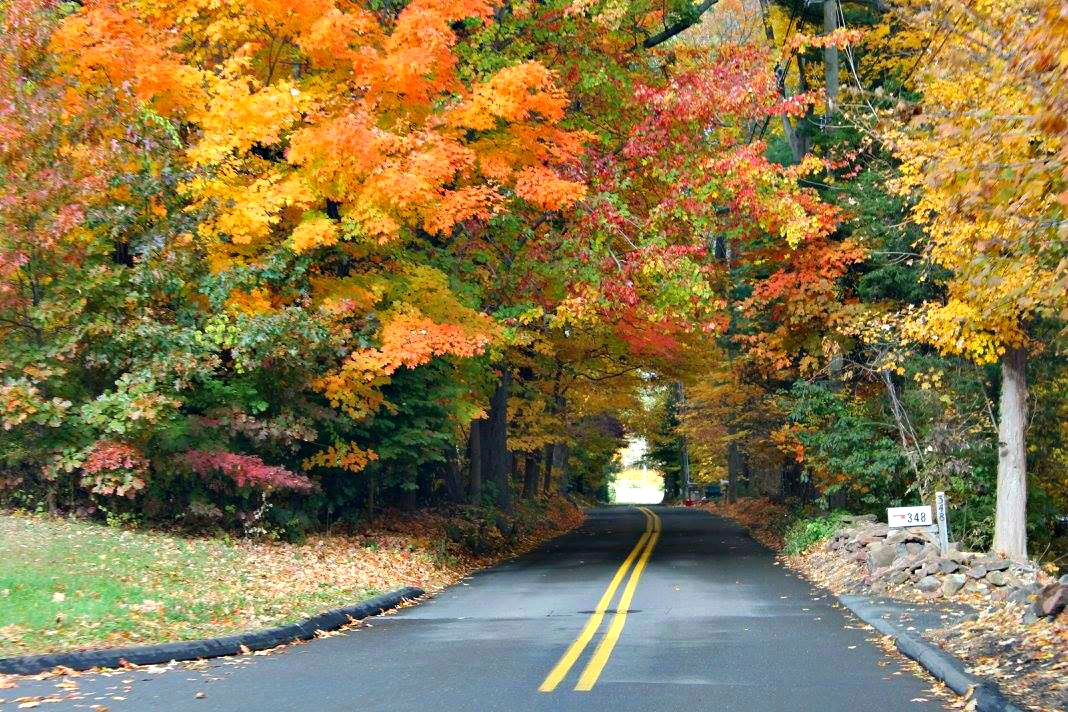 Vibrant Fall Foliage in New England