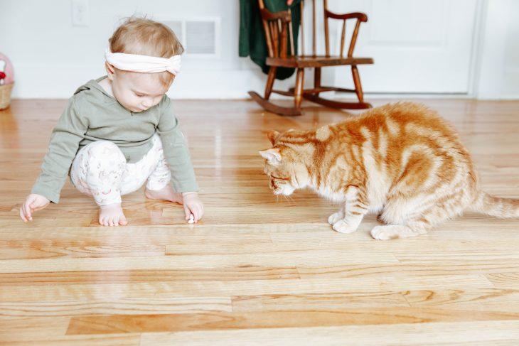 Baby feeding cat treats