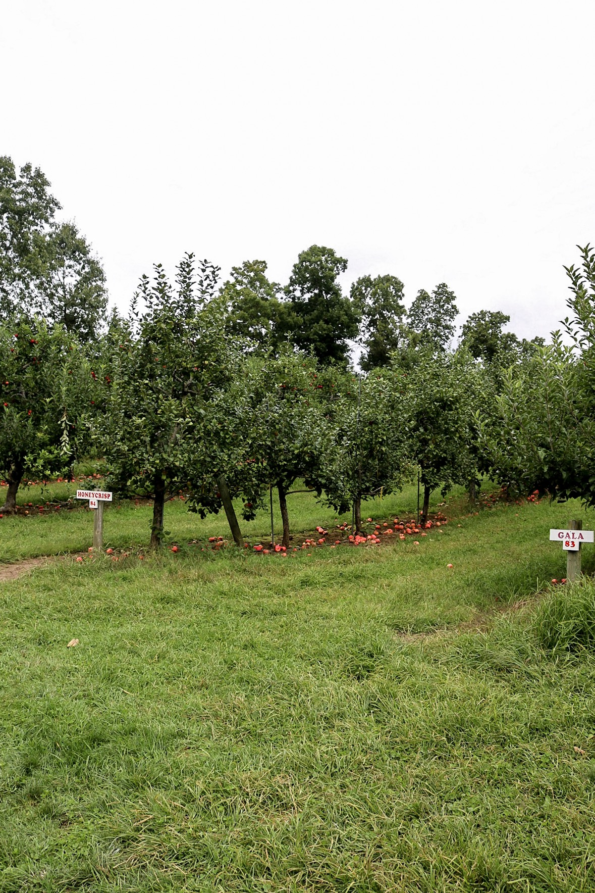 Drazen Orchard Cheshire CT