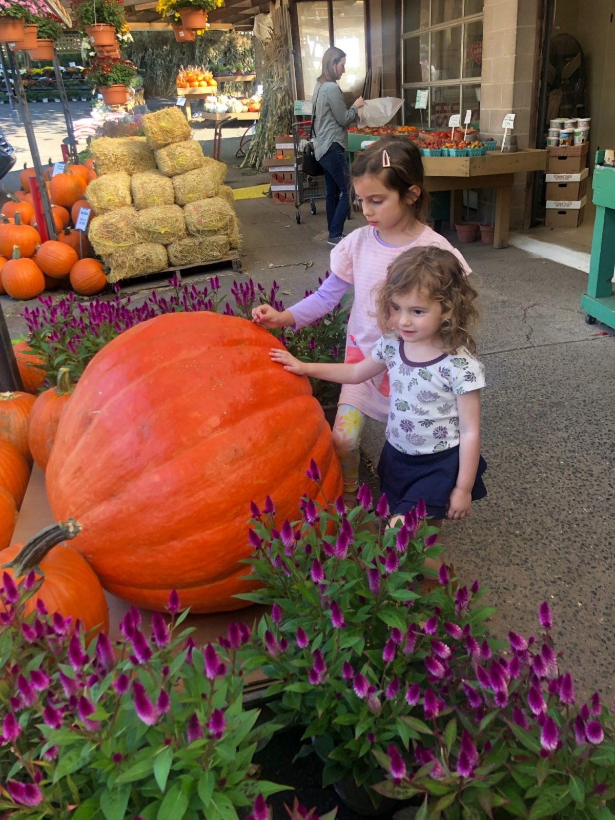 Giant Pumpkin at Farm with Little girls